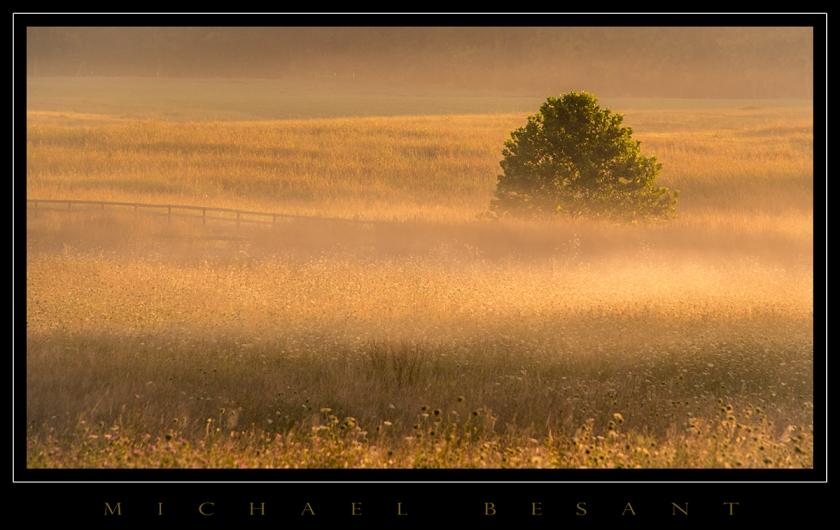 Fog-Tree_001