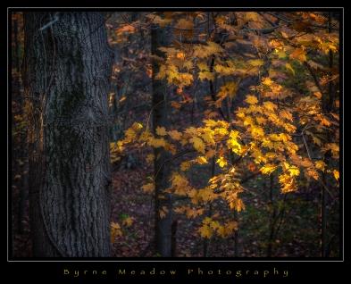 Autumn2017_009